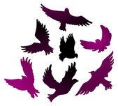 Birds vector set — Stock Vector