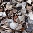 Stock Photo: Winter Leaves