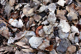 Winter Leaves — Stock Photo