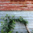 Stock Photo: Rusted corrugated Iron with Wild Rose