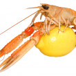 Stock Photo: Langoustine Shellfish