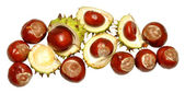 Horse Chestnut Tree Conkers — Stock Photo