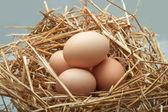 Eggs chicken put on hay. — ストック写真