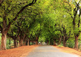 Beautiful village road in India, with tamarind tree both sides — Stock Photo