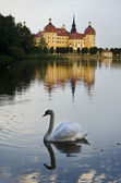 The Swan at the Lake — Stock Photo
