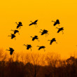 Royalty-Free Stock Photo: Sandhill Cranes at Sunset