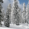 Snow on Forest Trees — Stock Photo #13337704
