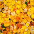 Autumn Leaves — Stock Photo #14015392
