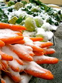 Snow Carrots — Stockfoto