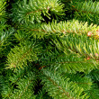 Fir Tree Branches — Stock Photo #18125295