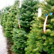 Christmas Trees — Stock Photo #18125301