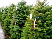 Christmas Tree Lot — Stock Photo