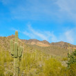 Cactus in Arizona — Stock Photo #18578995