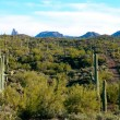 Cacti Mountain — Stock Photo #18579037