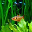 Fish in Aquarium — Stock Photo #25014365