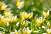 свежие весенние цветы — Стоковое фото