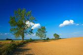 Landschap geploegd velden — Stockfoto