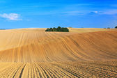 Landscape of undulating fields — Stock Photo