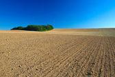 Paysage de champs labourés or. — Photo