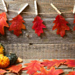 Autumn background with red leaves — Stok fotoğraf