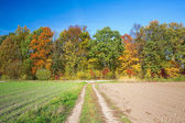 Autumn landscape. Road through farmland. — Stock Photo