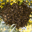 Bees on the hive — Stock Photo