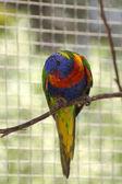Colour parrot — Stock Photo