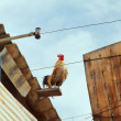 Stock Photo: Rooster on roof