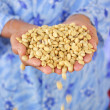 Fresh coffee grains in hands, before roasted. - Stok fotoğraf