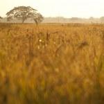 Lonely tree in the mist, nature autumn season, landscape — Stock Photo