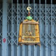 Wooden bird cage — Stock Photo