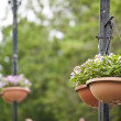 Hanging basket of flowers — Stock Photo