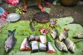 Verse vis op de markt in luang prabang, laos — Stockfoto