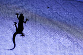 Silhouette of a lizard — Stock Photo