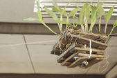 Small beautiful green tree in pot, wooden sticks, branch with le — Stock Photo