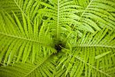 Fresh green leaf — Stock Photo
