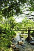 Broar, bambu, tropiska regnskogar, thailand — Stockfoto