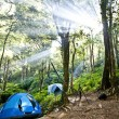 Camping tents in forest — Stock Photo #20106211