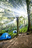 Camping tents in forest — Stock Photo