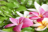 Flower spa massage on water — Stock Photo