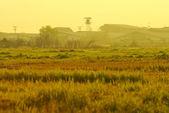 Arroz campo hierba verde casa fondo césped al atardecer amanecer — Foto de Stock