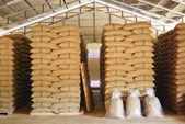 Coffee beans warehouse — 图库照片