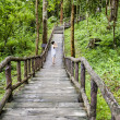 Wood bridge to jungle, Chiang Mai, Thailand — Stock Photo