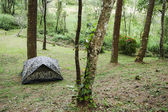Camping tent in forest of Thailand — Stock Photo