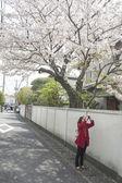 молодая женщина с стоял на дороге и принимая фото черри blos — Стоковое фото