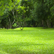Garden green grass — Stock Photo