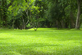 Garden green grass — Zdjęcie stockowe
