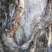 Realistic wood tree texture — Stock Photo