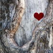 Stock Photo: Heart of nature