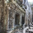 Ta Phrom. Siem Reap. Cambodia — Stock Photo